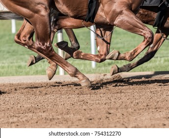 Chestnut Horse Legs Pound the Dirt Track
