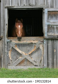 Chestnut horse looking out of his stall