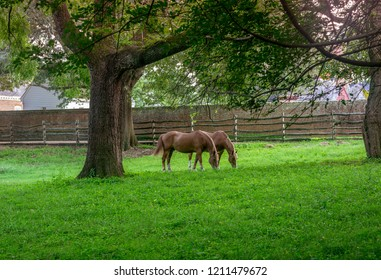 Chestnut Horse Pair in Green Pasture Williamsburg Virginia USA - Colorful - Green grass, Mature Trees, Fence, Rustic, Brick Wall Backdrop