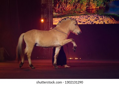 Spanish Step Horse Images, Stock Photos & Vectors | Shutterstock