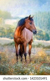 Chestnut horse standing in a meadow full of flowers at sunset
