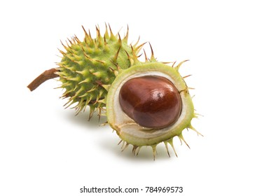 chestnut isolated on white background