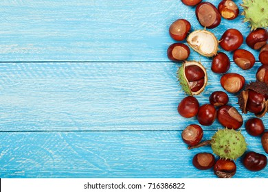 chestnut on blue wooden background with copy space for your text. Top view