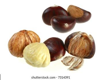 Chestnut set macro isolated on white background