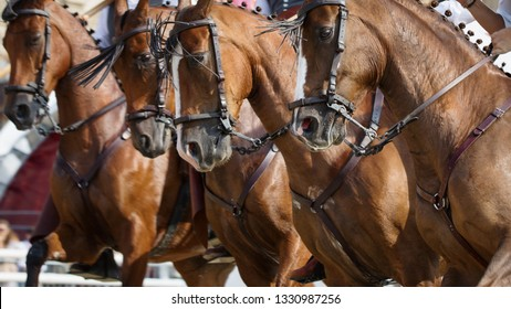Chestnut Spanish horses in a traditional authentic bridle, portrait close up