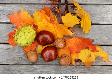 Chestnuts and acorns on wooden background. Autumn leaves.