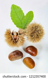 Chestnuts and chestnut bur isolated on white background.