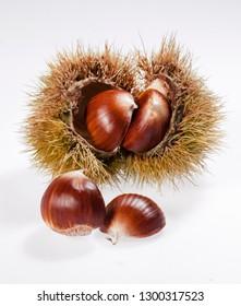 chestnuts chestnut hedgehog