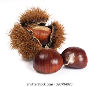 chestnuts and curly chestnut isolated on white background