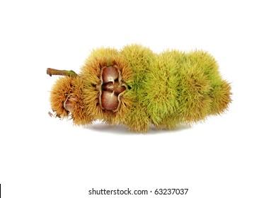 Chestnuts inside husk isolated on white