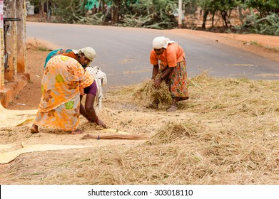 CHETTINAD, INDIA - JANUARY 13, 2014 : A faming family engaged in threshing rice on a road in rural south India.
