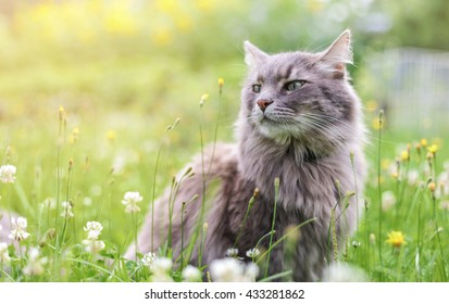 Chewie the cat in the wild