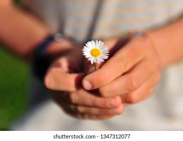 Chhild's hands holding one camomile flower