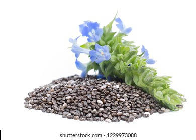 Chia (Salvia hispanica) Pile of seeds with flowers on white background