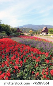 Chiang Mai - December 25th, 2017: Fields of red flowers at Royal Park Rajapruek, formerly Royal Flora Rajapruek, a popular agro-tourism attraction in Chiang Mai and a center for agricultural research.