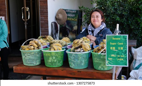 Chiang Mai, Thailand; 22/01/2019; A local woman is selling bananas and Sugar Cane infront of ticket counter, Elephant Sanctuary, Chiang Mai, Thailand.