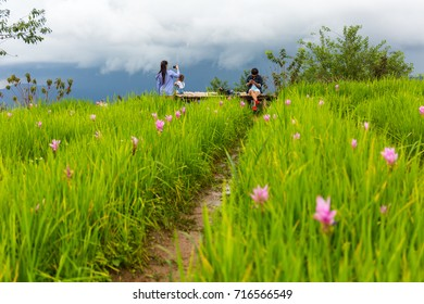 CHIANG MAI, THAILAND - 9/14/2017: Tourists at the Mon Chaem mountain flower garden in Chiang Mai, Thailand.