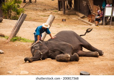 CHIANG MAI, THAILAND - Daily elephant show at The Thai Elephant Conservation Center, mahout show how to ride and transport in forest, June 25, 2014 in Chiang Mai, Thailand.