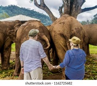 Chiang Mai, Thailand Elephant Nature Park