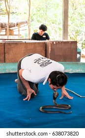 """Chiang Mai, THAILAND - February , 2017: """"Show of snakes"""" performer kiss with a cobra during a show"""