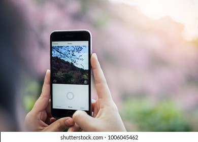 CHIANG MAI, THAILAND - JAN 15, 2018: A woman hand holding iphone and using carema of  instagram application. Instagram is largest and most popular photograph social networking.
