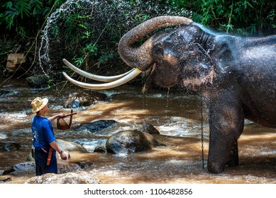 CHIANG MAI, THAILAND - JUNE 3, 2018 : Unidentified Mahout bathe and clean the elephant in the river, The activitiy at MAESA ELEPHANT CAMP in Chiang Mai, Thailand.