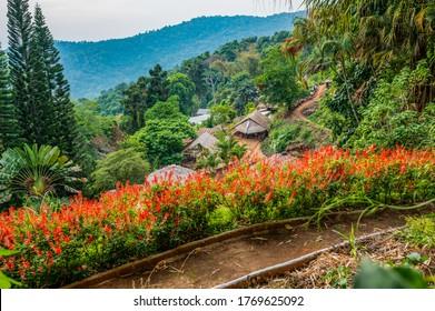 CHIANG MAI, THAILAND - May 17, 2020 : Park at Doi Pui Mong hill tribe village, Chiang Mai province.