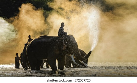 CHIANG MAI,THAILAND,elephants taking a bath with mahout in river,Visitors can visit nature closely,tourist riding on elephants trekking in Chiang Mai Thailand.