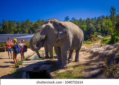 CHIANG RAI, THAILAND - FEBRUARY 01, 2018: Unidentified people taking pictures close to a huge elephant in Jungle Sanctuary in Chiang Mai