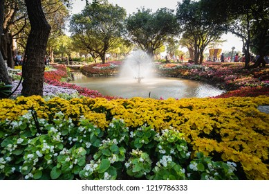 Chiang Rai, Thailand - JANUARY 02, 2016: Flowers Blooming at the Chiang Rai Flower Festival and Music in the Park 2016