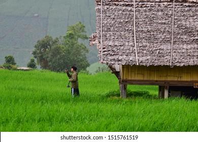 Chiangmai, Thailand - August 18, 2019: Pa Bong Piang Rice Terraces at Pa Bong Piang village in Mae Cham, Chiangmai, Thailand.