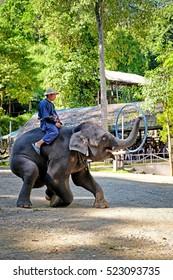 CHIANGMAI - NOVEMBER 14, 2016: Tourist enjoying the elephant shows at  Mae Sa Elephant Camp in Chiang Mai, Thailand