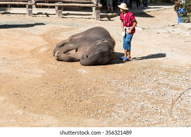 CHIANGMAI THAILAND 03 DEC 15 elephant Showing at The young Elephant school on 03 December, 2015 in Chiangmai, THAILAND