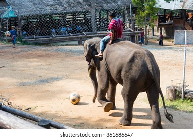 CHIANGMAI THAILAND 03 DEC 15 elephant playing and kicking football at The Maesa elephant camp on 03 December, 2015 in Chiangmai, THAILAND