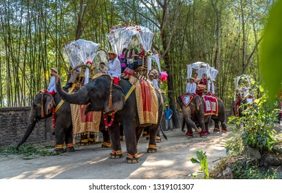 CHIANGMAI, THAILAND - FEBBRUARY 14, 2019 : 9 Couple riding elephant in wedding registration ceremony on elephant at Mae Tang Elephant Camp, Chiang Mai in Thailand.