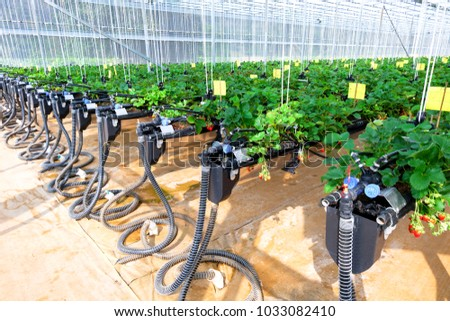CHIANGMAI, THAILAND - February 12 : Smart agriculture technology trend and internet of things (iot), vertical farming concept. Strawberry chang tnk farm. February 12 2018 in CHIANGMAI , THAILAND.