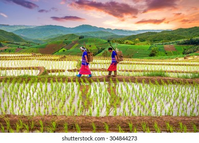 Chiangmai , thailand - July 25,2015 : Unidentified Hmong woman with rice field terrace background on July 25 ,2015 in Chiangmai , Thailand