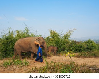CHIANGRAI, THAILAND - february 2016:mahout and elephants (mother and baby) walking on the mountain at day time