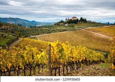Chianti Region, Tuscany, Italy. Vineyards in autumn at sunset