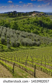 Chianti, Tuscany - A view of the village of San Martino al Vento, with vineyards and olive grooves