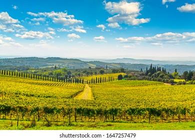Chianti vineyard panorama and cypresses row in autumn. Castelnuovo Berardenga, Tuscany, Italy, Europe.