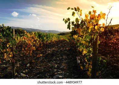 Chianti wineyards landscape in Autumn in Tuscany, Italy
