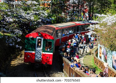 Chiayi, MAR 18: Red train and Cherry tree blossom on MAR 18, 2012 at Alishan National Scenic Area, Taiwan