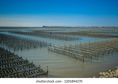 Chiayi , Taiwan - Sep 22, 2018: oyster farms Ocean Exploration at tidal area,. Dongshi Township, Chiayi County, Taiwan