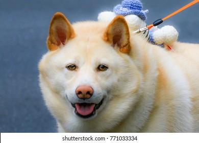 Chiba Fat Dog