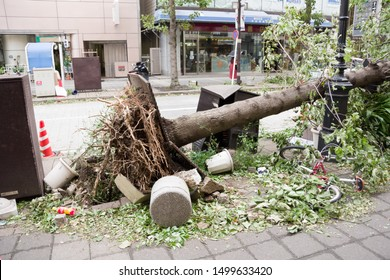 Chiba, Japan, 09/09/2019 , trees crashed to the ground on Chiba city center after Typhoon Faxai, assaulted the Kanto region.