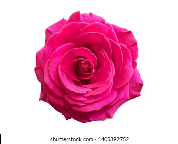 Chic Pink red Rose Macro On White Background