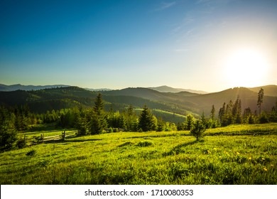 Chic view from hilltop onto a spruce forest growing on the hills and mountains on a sunny warm summer day against a blue sky. Concept of outdoor recreation and relaxation. Advertising space