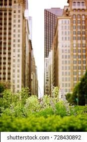 Chicago Cityscape with Foliage