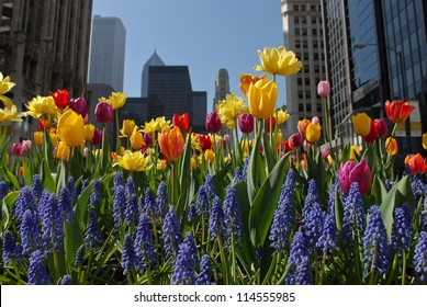 Chicago Downtown in Spring